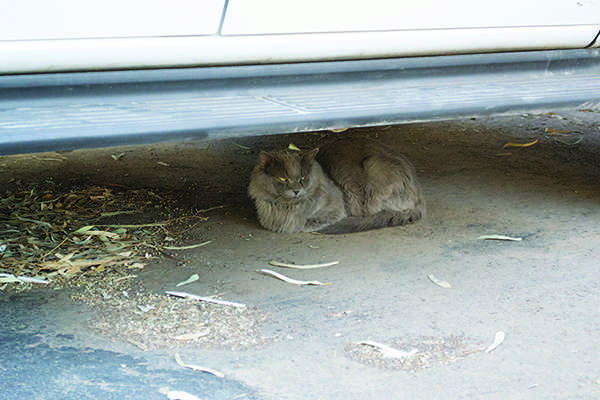 A Change for Signal Peak Cat Population